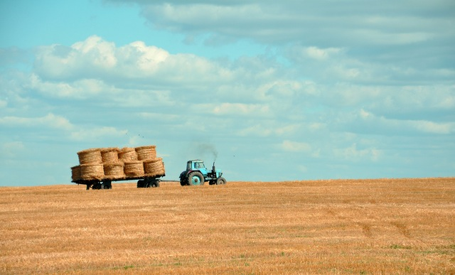 Bando Isi Agricoltura - contributi per imprese agricole Teramo Abruzzo